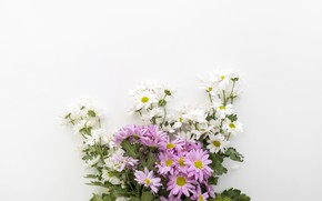 Picture white, flowers, background, chamomile, bouquet