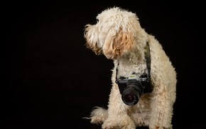 Picture background, dog, camera