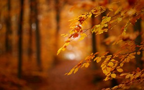 Picture autumn, leaves, branches, bokeh