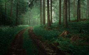 Picture road, greens, forest, trees