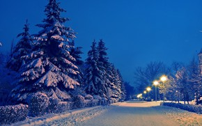 Picture Winter, The evening, Road, Snow, Lights, Spruce Trees
