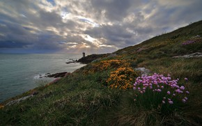 Picture the sky, flowers, coast, lighthouse, slope