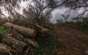 Picture fog, wood, logs