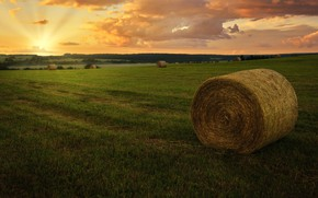 Picture field, forest, sunset, hay, The Beltsy Gregory