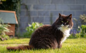 Picture greens, cat, summer, grass, cat, look, face, nature, wall, black and white, glade, garden, yard, …