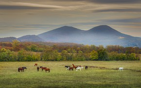 Picture field, autumn, forest, the sky, grass, clouds, trees, landscape, mountains, nature, fog, view, horses, dal, …