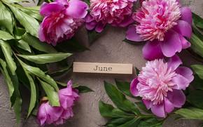 Picture flowers, pink, pink, flowers, peonies, peonies