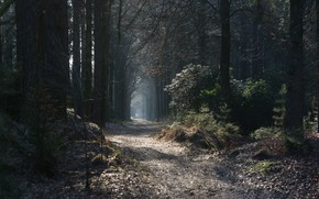 Picture forest, trees, nature, autumn, leaves, landscapes, sun, glare, fog, plants, bright, branches, path, blur effect, …