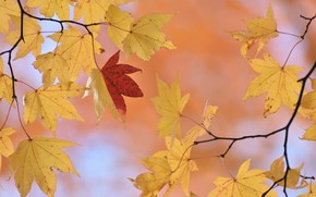 Picture autumn, leaves, nature, background