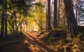Wallpaper road, forest, Finland, sunlight