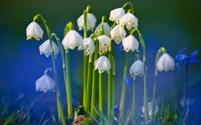 Picture macro, spring, bokeh, Snowflake
