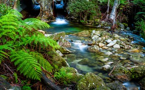 Picture Nature, River, Stones, Stream, Fern
