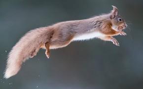 Picture background, jump, walnut, protein, red, flight