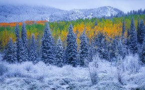 Picture autumn, forest, snow