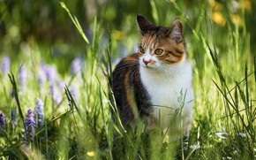 Picture cat, summer, grass, look, face, light, flowers, nature, pose, blur, walk, bokeh, spotted, motley