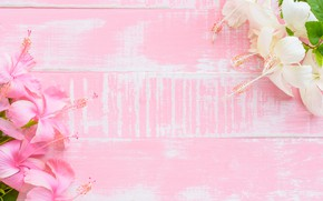 Picture flowers, background, pink, wood, pink, flowers