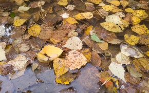Picture autumn, leaves, puddle