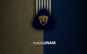 Picture wallpaper, sport, logo, football, Italian Seria A, Club Universidad Nacional UNAM PUMAS