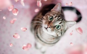 Picture cat, petals, green eyes