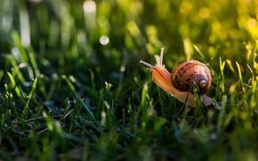 Picture greens, summer, grass, macro, light, glare, snail, shell, weed, horns, bokeh