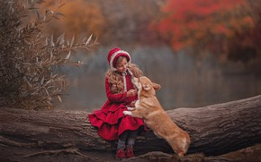 Picture autumn, leaves, branches, nature, pose, Park, dog, little red riding hood, girl, log, sitting, in …