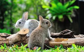 Picture the sun, nature, rabbits, bokeh