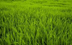 Picture Nature, Grass, Green, Plants, Nature, Grass, Flora, Plants, Blooming, Flora, Growth, by Felix Mittermeier, Felix …