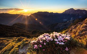 Picture forest, summer, the sun, clouds, rays, flowers, mountains, glare, dawn, hills, vegetation, tops, Bush, height, …
