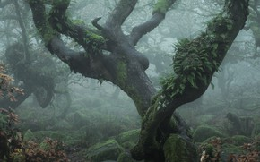 Picture forest, trees, branches, fog, stones, vegetation, moss, curves, fern, curved