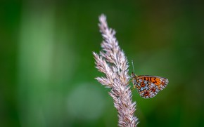 Picture Macro, Butterfly, Plant, Insect, Macro, Butterfly, Insect, Close-Up, Egor Kamelev, by Egor Kamelev, Black and …
