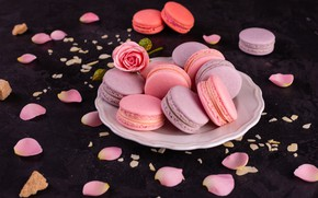 Picture rose, petals, cookies, macaron