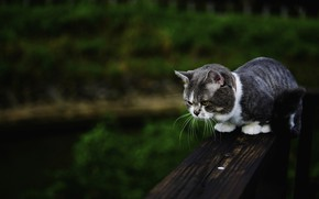 Picture cat, summer, cat, bench, nature, the dark background, kitty, grey, Board, kitty, sitting, striped, teen, ...