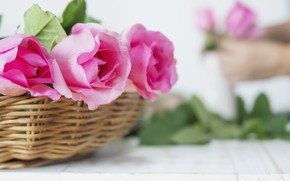 Picture roses, bouquet, basket, wood, roses