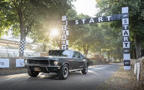 Picture Ford, Fastback, 2018, 1968, Mustang GT, Bullitt, Goodwood