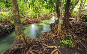 Wallpaper landscape, forest, river, beautiful, emerald, tropical, lake, tree, lake, mangrove, tropical, mangrove, forest