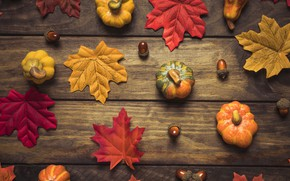 Picture autumn, leaves, background, tree, colorful, pumpkin, Board, wood, acorns, background, autumn, leaves, autumn, maple