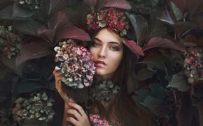 Picture look, girl, flowers, photo, hydrangea, Marketa Novak