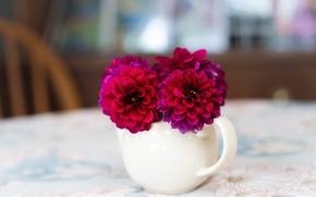 Picture flowers, table, bouquet, mug, Cup, white, light background, raspberry, bokeh, dahlias