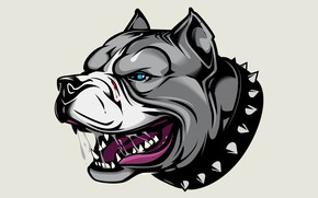 Wallpaper art, Pitbull, avatar, Pit bull, dog collar with spikes, angry dog, the dog