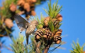 Picture bird, branch, needles, bumps