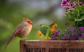 Picture flowers, bird, flowerbed, Cardinal