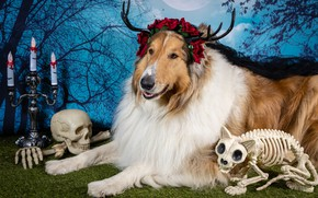 Picture cat, look, face, flowers, branches, pose, tree, holiday, the moon, skull, hand, roses, dog, candles, …