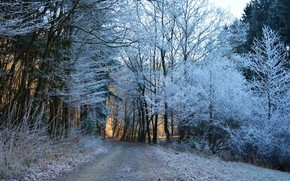 Picture winter, road, forest, trees