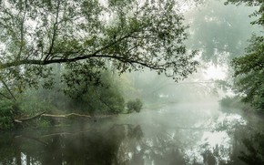 Picture forest, nature, fog, river, morning, atmosphere, shrubs, daylight