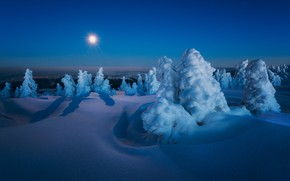 Picture winter, snow, trees, landscape, night, nature, the moon, ate, shadows