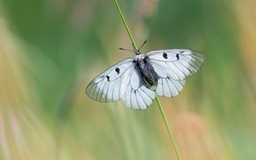 Picture macro, butterfly, stem, insect, white, green background