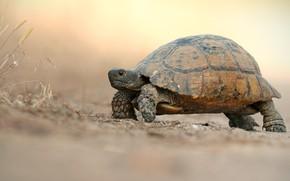 Picture road, background, turtle, light, walk, bug, crawling, land