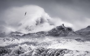 Picture sea, wave, the sky, squirt, clouds, storm, bird, wave, storm, Seagull, monochrome, black and white …