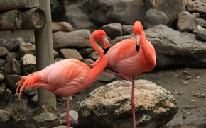 Picture stones, pink, Flamingo, aviary