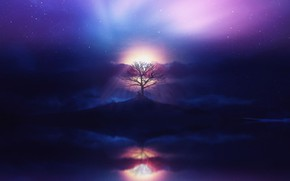 Picture aurora, sky, sea, ocean, sunset, clouds, stars, tree, boy, purple